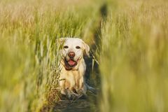 Happy dog in countryside Royalty Free Stock Image