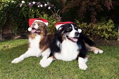 Happy Dog Couple Happy New Year Christmas Celebrate. Conceptual shot for celebrating Happy New Year. Happy Dog Couple sitting in the garden with red hats royalty free stock photography