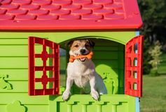 Happy dog in doghouse holding toy bone in mouth Stock Images