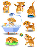 Happy dog doing different activities. Vector illustration of cartoon happy dog doing different activities  on a white background Royalty Free Stock Photo