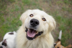Happy dog face royalty free stock image