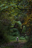 Happy dog in the forest. Running Royalty Free Stock Images