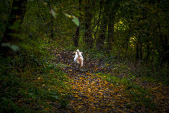 Happy dog in the forest. Running Stock Photo
