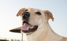 Happy dog free Stock Photography