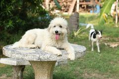 Happy dog in the garden stock photo