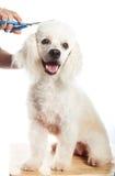Happy dog hair cut Royalty Free Stock Photo