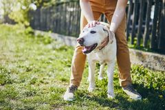 Happy dog and his owner. Young man embracing labrador retriever on back yard of house royalty free stock image