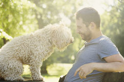 Happy dog and his owner royalty free stock photography