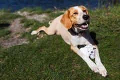 Happy dog holding baby shoes Stock Image