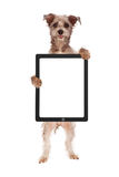 Happy Dog Holding Blank Tablet Computer Royalty Free Stock Images