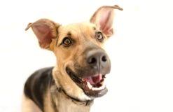 Free Happy Dog Isolated Stock Images - 101443544