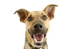 Happy Dog Isolated on White stock photo