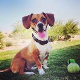 Happy dog Stock Photography
