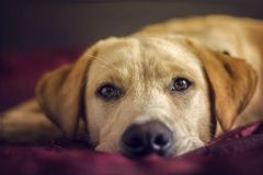 HAPPY DOG JOY IN THE HOUSE royalty free stock image