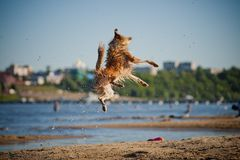 Happy dog jumping up in the water Royalty Free Stock Photography