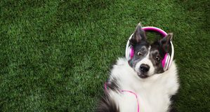 Dog laying in the grass listening to music. Happy dog laying in the grass listening to music stock image