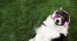 Dog laying in the grass listening to music. Happy dog laying in the grass listening to music royalty free stock photo