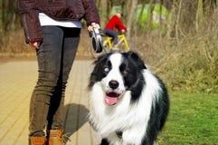 Happy dog on leash walking with girl Stock Photos