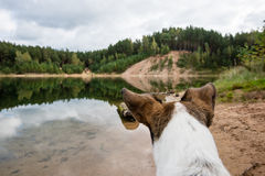 Happy dog is looking for direction by the lake Royalty Free Stock Image