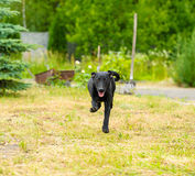 Happy dog in the meadow Stock Images