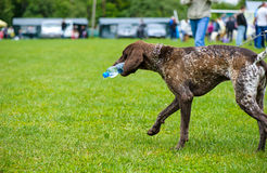 Happy dog in the meadow Stock Photography