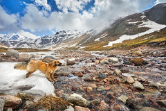 Happy Dog in the mountains Stock Photos