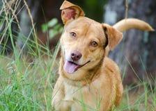 Happy Dog. A happy dog mutt animal shelter photo stock image