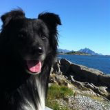 A happy dog by the north sea. stock image