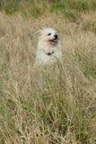 Happy dog enjoys sudden cool breeze royalty free stock image