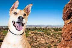 Happy Dog Overlooking Phoenix Arizona Royalty Free Stock Photos