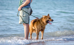 Happy dog and owner on a dog beach in Michigan. A dog and owner  relax on a dog beach in Michigan USA Royalty Free Stock Photo