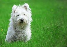 Happy Dog in a Park. Happy Dog  at Versailles park near Paris Stock Photo