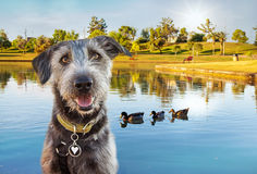 Happy Dog at Park in Summer Stock Photography