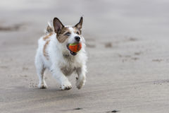 Happy dog Royalty Free Stock Photo
