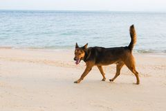 A happy dog playing at the beach. Summer concept stock images