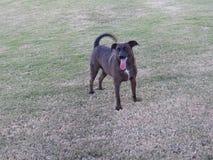 Happy Dog Playing catch Stock Photo