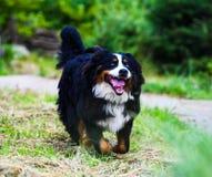 Happy Dog playing outside smiles stock photo