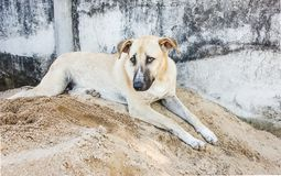 Happy dog playing sand pile. Stock Image