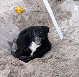 Happy dog playing in the sand Stock Photos