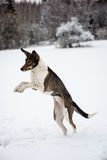 Happy dog is playing in the snow Royalty Free Stock Photos