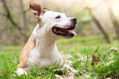 Happy Dog Portrait royalty free stock photos