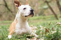 Happy Dog Portrait royalty free stock photo