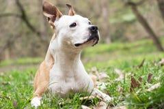 Happy Dog Portrait royalty free stock images