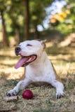 Happy Dog Portrait royalty free stock image