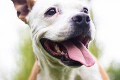 Happy Dog Portrait Stock Photos