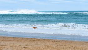 Free Happy Dog Running Along A Sandy Beach Beautiful Turquoise Sea Stock Images - 107915754