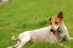 Happy Dog Sitting On Field. A dog sitting and relaxing on field Stock Photo