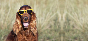 Happy dog smiling Royalty Free Stock Images