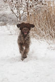 Happy dog in the snow Royalty Free Stock Photography