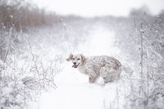 Happy dog in snow Royalty Free Stock Photography